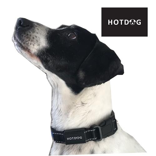 Welcome to HOTDOG Pets!